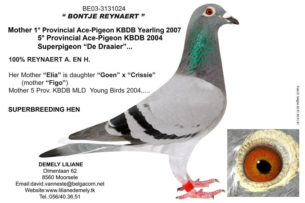 BE03-3131024 Bontje Reynaert