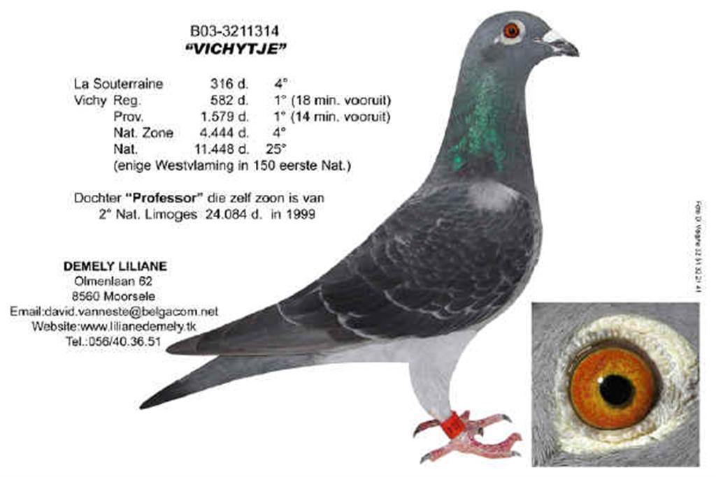 BE03-3211314 Vichytje