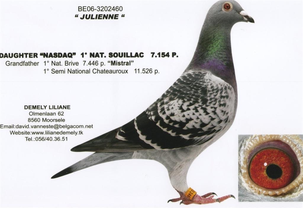 BE06-3202460 Julienne