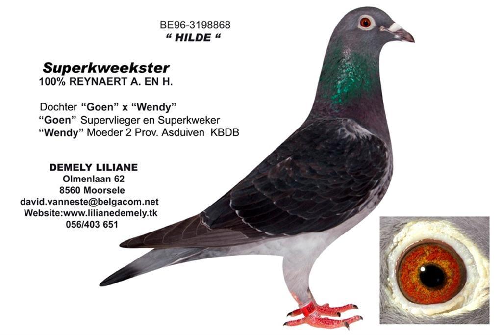 BE96-3198868 Hilde