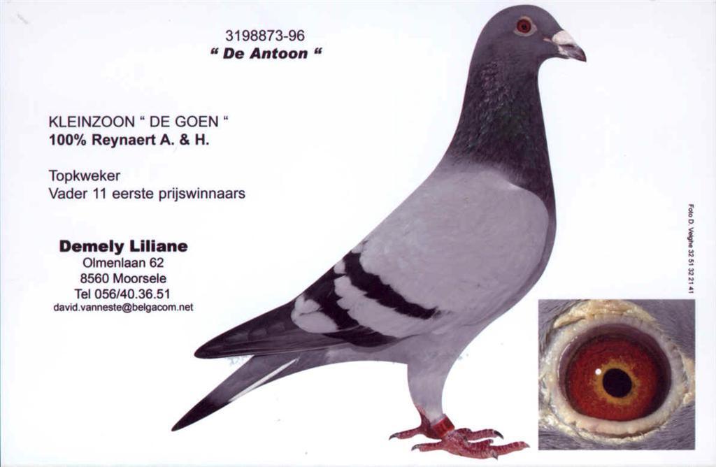 BE96-3198873 Antoon