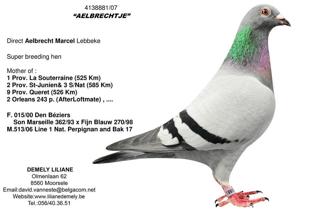 BE07-4138881 Aelbrechtje