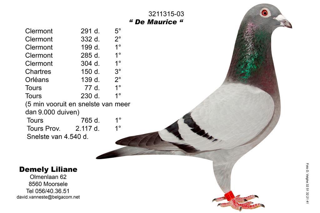 B03-3211315_Maurice (大)