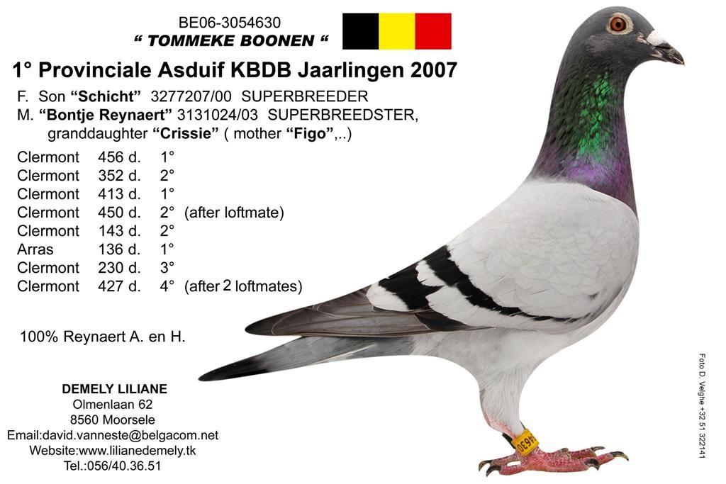 B06-3054630_Tommeke_Boonen (大)