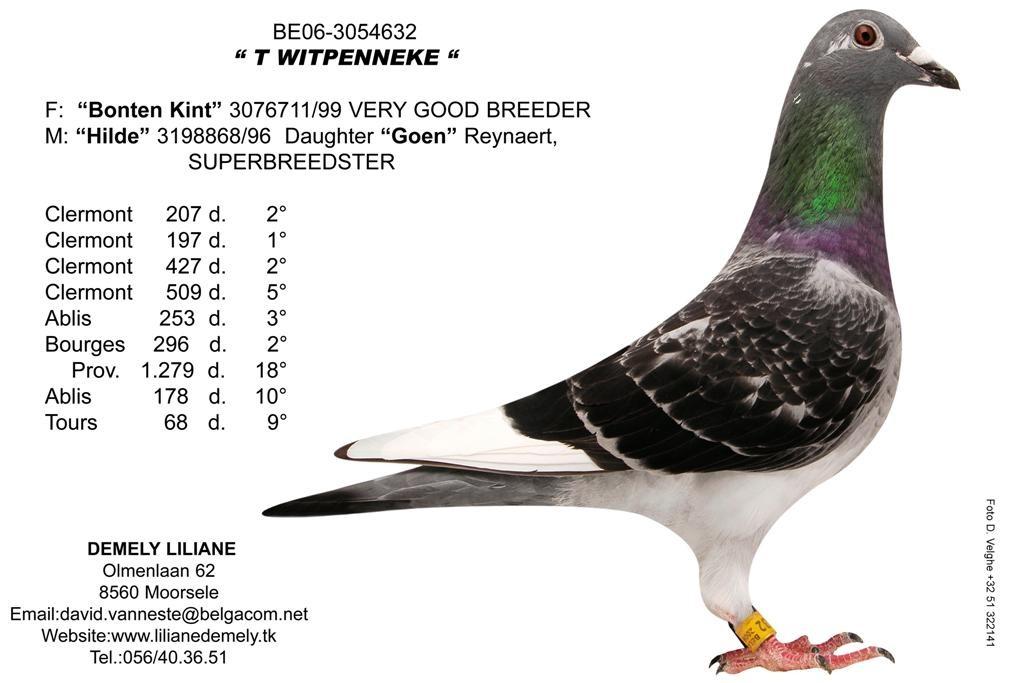B06-3054632_Witpenneke (大)