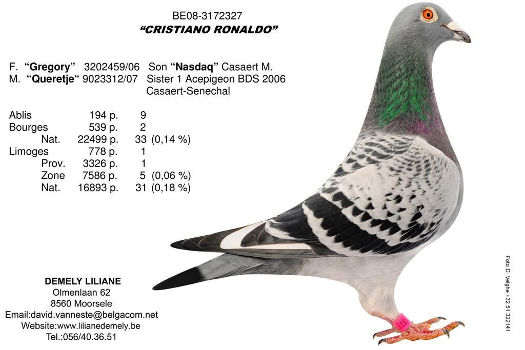 BE08-3172327_Cristiano_Ronaldo (Large)