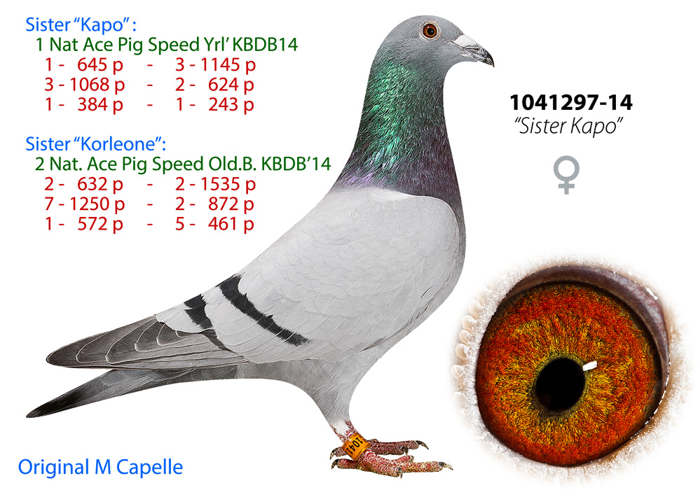BE14-1041297